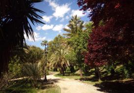 Palmier-alicante